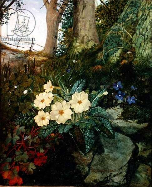 Primroses, Violets and Other Flowers