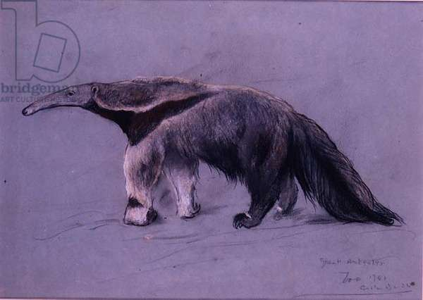 Great Anteater, 1941 (pastel)