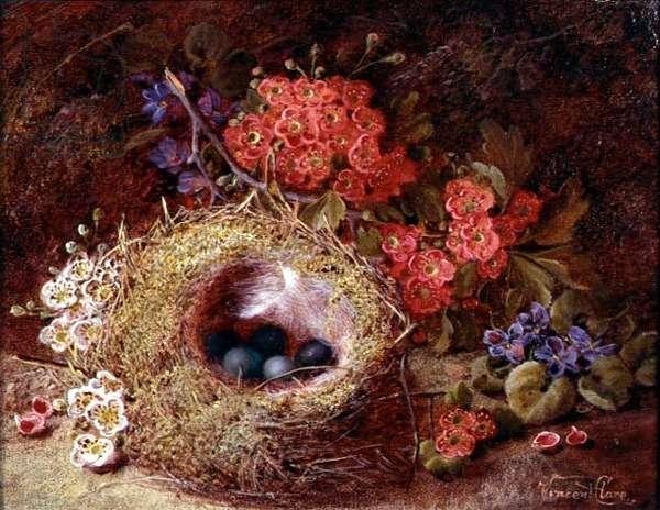 Still life of a bird's nest and blossom