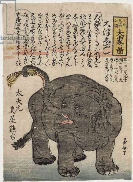 Yokohama - Elephant, c.1860 (woodblock print)