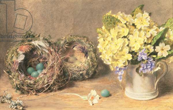 Spring Flowers and Birds' Nests, c.1830 (w/c & bodycolour on paper)