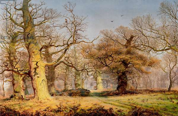 Oak Trees in Sherwood Forest, 1877 (oil on canvas)