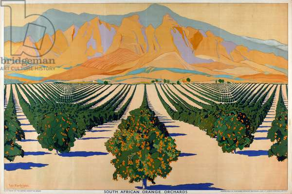 South African Orange Orchards, from the series 'Summer's Oranges from South Africa' (colour litho)