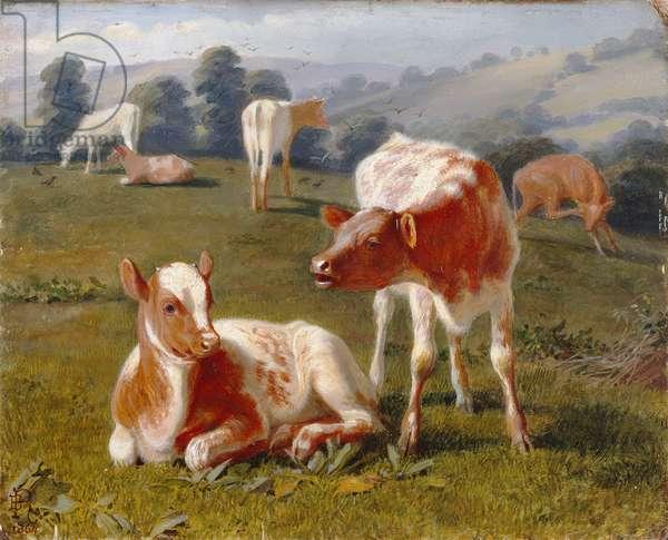 Calves in a Meadow (oil on millboard)