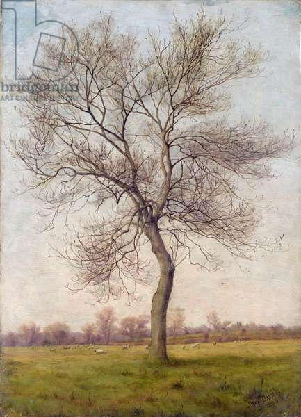 Study of an Ash Tree in Winter, 1883 (oil on canvas)