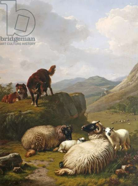 Sheep and dogs, 1861 (oil on canvas)