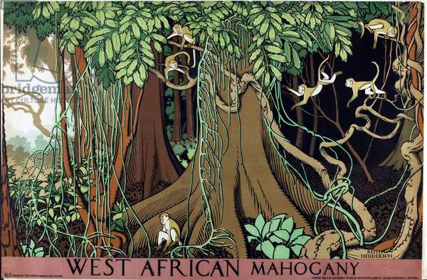 West African Mahogany (colour litho)
