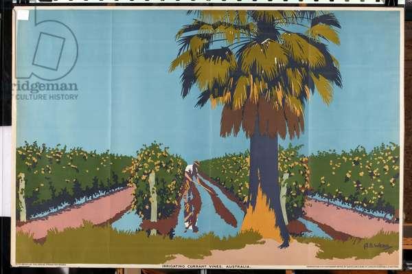 Irrigating Currant Vines - Australia (colour litho)