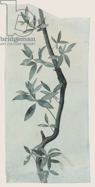 Study of Willow Leaves, c.1857 (pencil & w/c on paper)