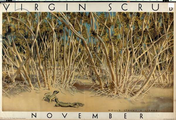 November - Virgin Scrub (colour litho)