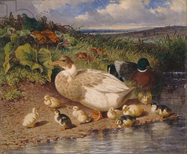 Ducks by a Stream, 1863 (oil on panel)