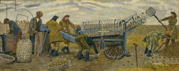Potato Sorting, Berwick (oil on canvas)