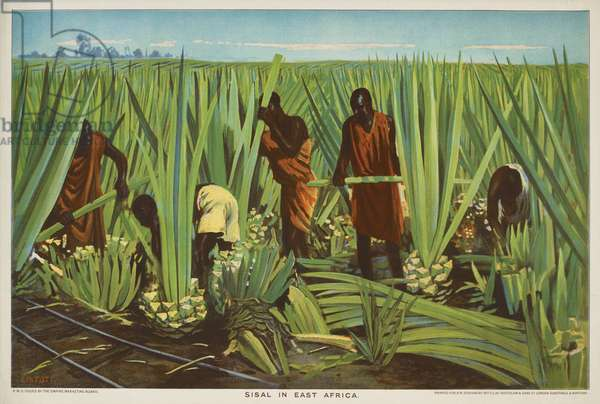 Sisal in East Africa, from the series 'Empire Trade is Growing', 1927 (colour litho)