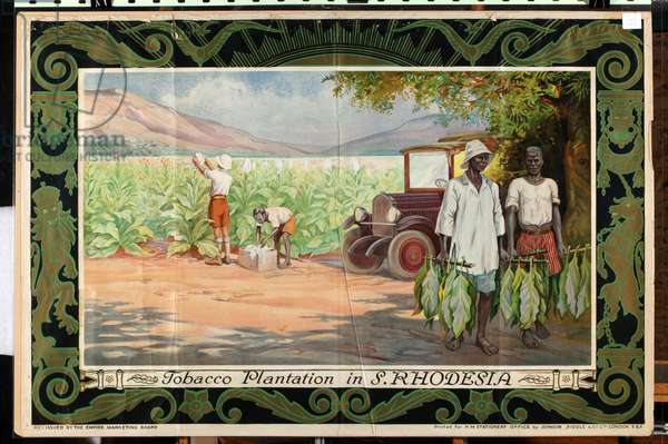 Tobacco Plantation in Southern Rhodesia, from the series 'Smoke Empire Tobacco' (colour litho)