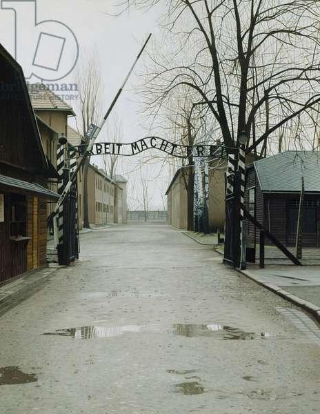 Auschwitz, 2004 (oil on panel)