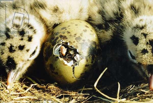 Seagull Nest II (photo)