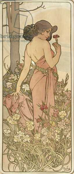The Flowers: Carnation, 1898 (colour litho)