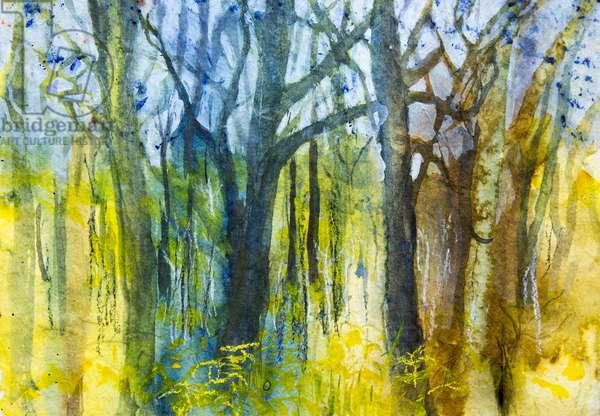 Margaret's Forest
