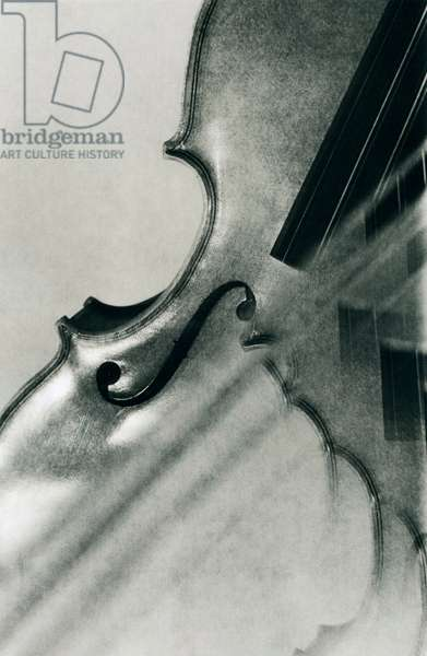 Artistic composition of a violin, close-up.