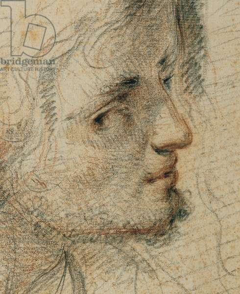 Study for a Head, 1633 (black and red pencil on white paper)