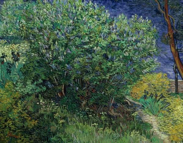 Lilac Bush, 1889 (oil on canvas)