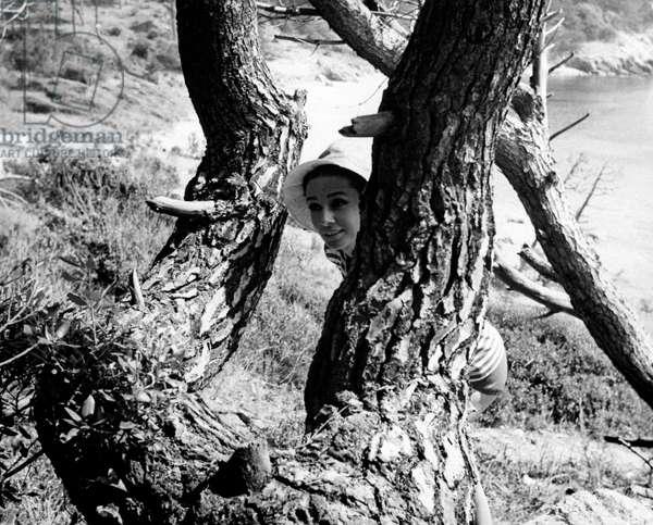 Audrey Hepburn half hidden behind a tree in the French coast, 1966 (b/w photo)