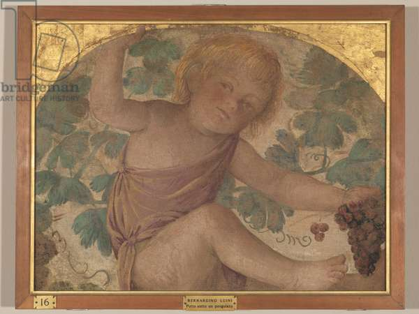Putto under an Arbor (fresco transferred to panel)