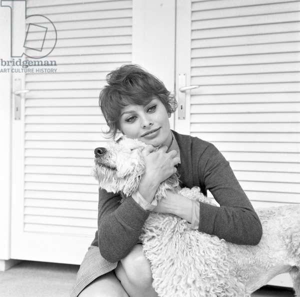 Sophia Loren hugging her dog, 1950s (b/w photo)