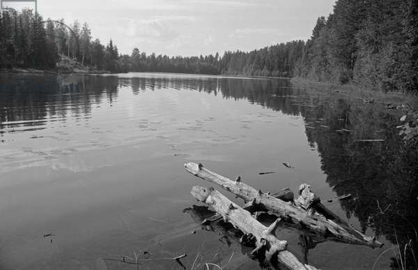 Two tree trunks floating on the lake waters, Finland, 1960s (b/w photo)