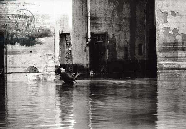 The flood in Florence, 1966 (b/w photo)