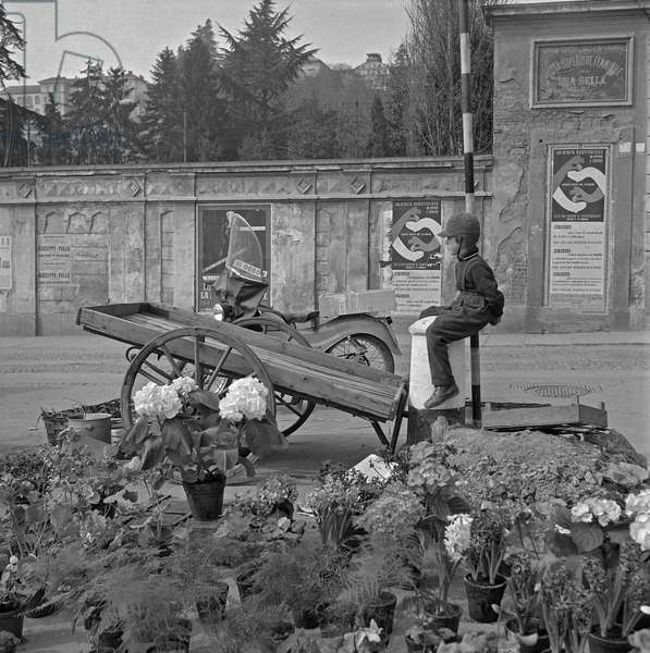 A child watching over a flower stall on piazza Duomo, On the wall behind him, the sign of the Female Primary School Sella, Biella, Italy, 7th April 1955 (b/w photo)