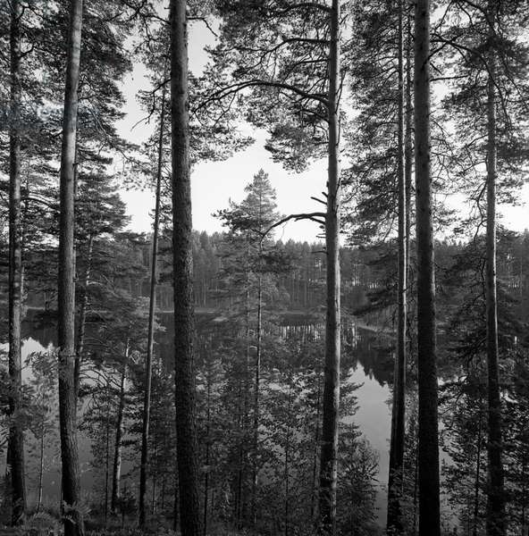 Some trees by the lake, Finland, 1960s (b/w photo)
