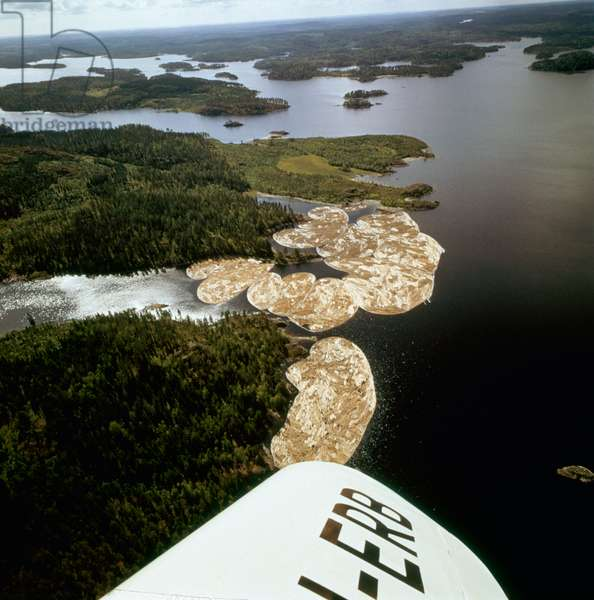 Aerial view of a Finnish lake, Some cut down trees tied together to form an islet, Finland, 1960s (b/w photo)