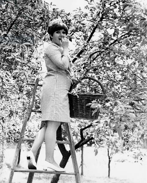 Orietta Berti picks and tastes some fruits from a treetop