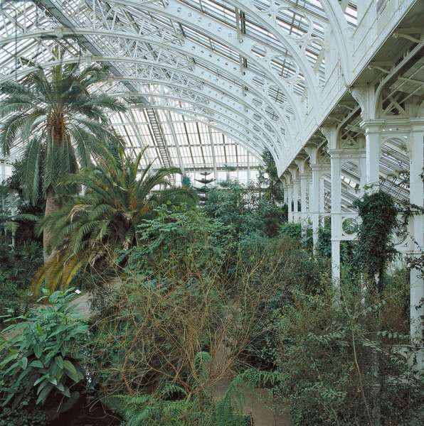 Kew Gardens. Palm House, 1844 - 1848, 19th Century, iron and glass