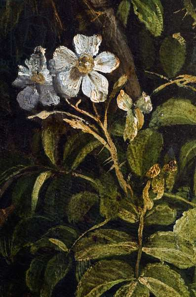 Flowers, detail from The Rest on the Flight into Egypt, 1547 (oil on canvas)