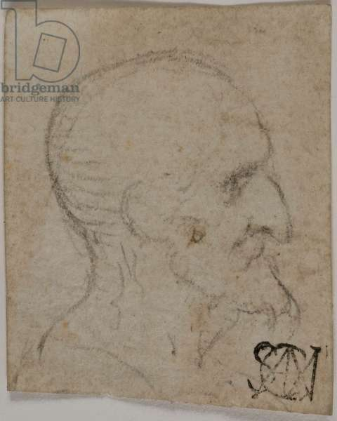 Man Face in Profile