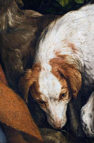 Dog, detail from The Rest on the Flight into Egypt, 1547 (oil on canvas)