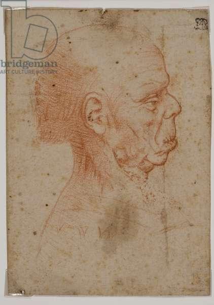 Grotesque Male Head in Profile
