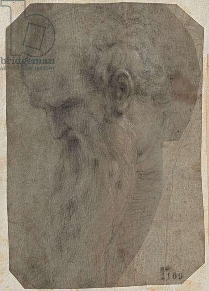 Bearded Man Head in Profile Looking Down