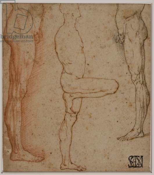 Three Anatomical Studies