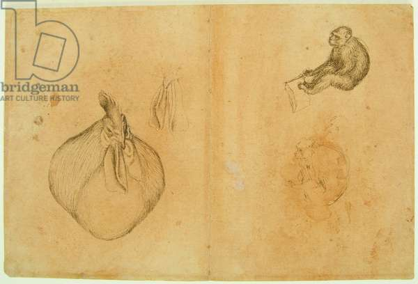 Studies of a Rooster and a Monkey