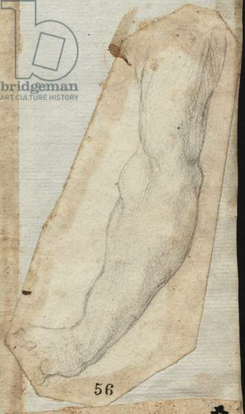 Study of a Left Male Arm