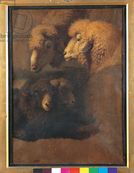 Study of Four Sheep Heads (oil on paper laid on cardboard)