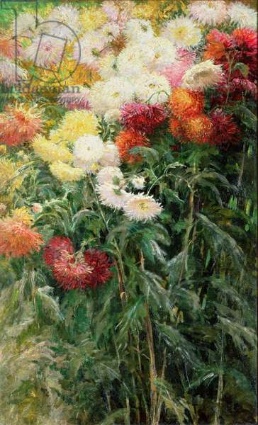 Clump of Chrysanthemums, Garden at Petit Gennevilliers, 1893 (oil on canvas)