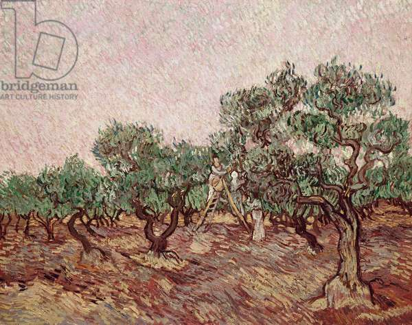The Olive Pickers, 1888-89 (oil on canvas)