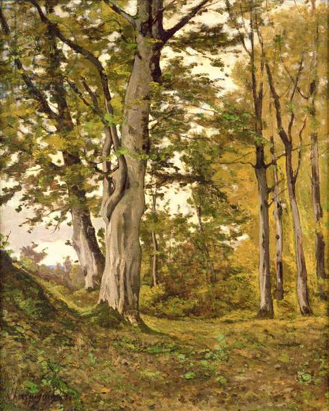 Forest at Fontainebleau, 1880 (oil on canvas)