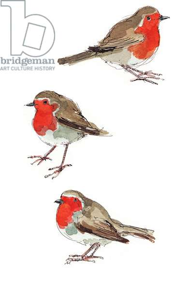 Robins 3
