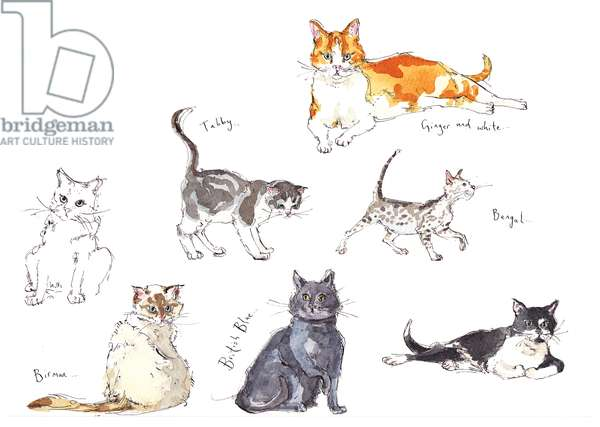 Cat Drawings