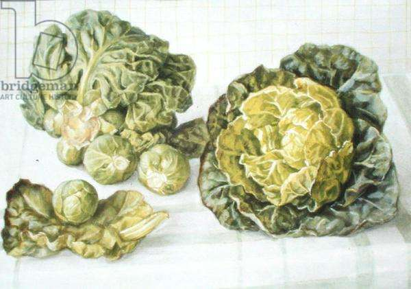Brussels Sprouts, 1992 (w/c and gouache on paper)